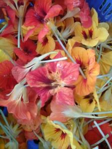 , Récolte de ce week-end – Couleurs automnales, Les Folies Maraîchères - Contrôle BE-BIO-01