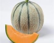 Fruits et Légumes, Accueil, Les Folies Maraîchères, Les Folies Maraîchères