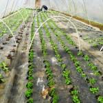 Premières plantations